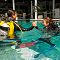 OK Divers diving pool, Open water diver course