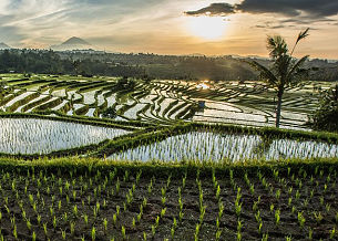Information and news about Bali