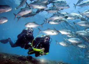 OK Divers PADI Scuba Diving Safari