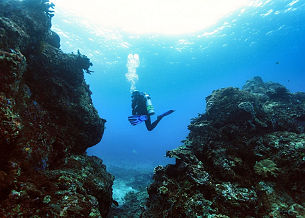 OK Divers PADI Scuba Diving Prices