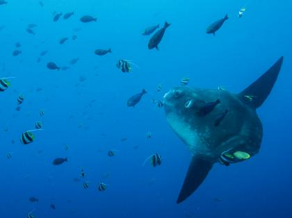 Diving in Bali - Gili Mimpang with Sunfich Mola Mola