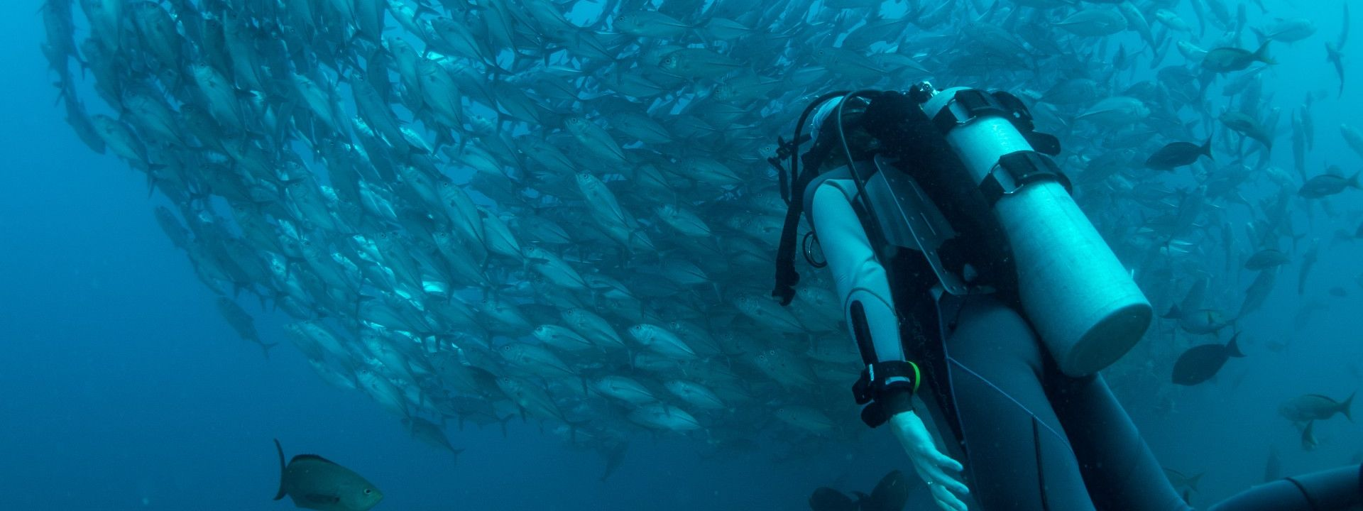 Scubadiving with respect to marine life