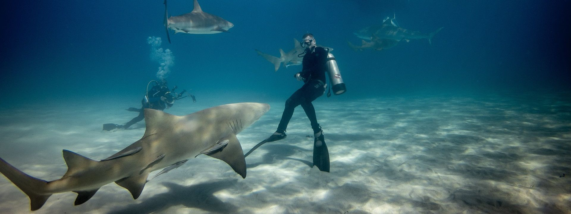 Protecting sharks is protecting the oceans