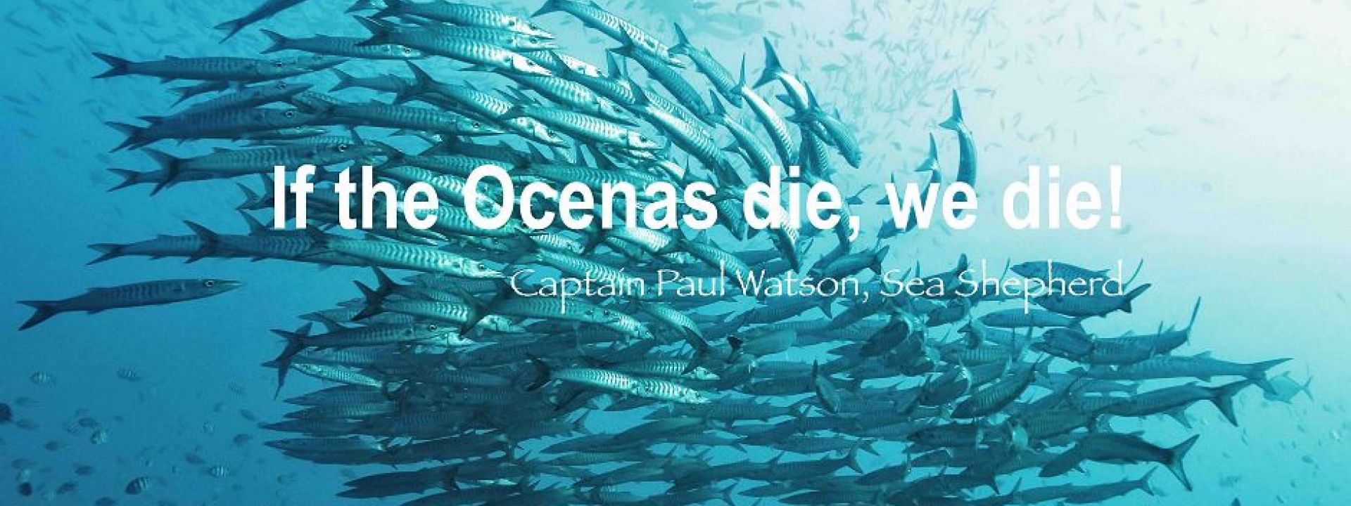 Why Fishing Destroy Our Ocean And Planet