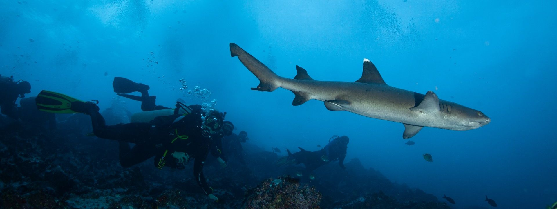 Diving in Bali - Gili Mimpang with Sharks